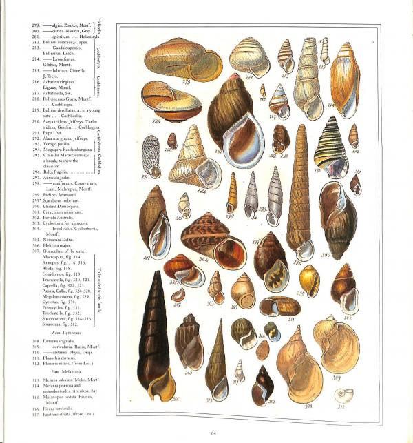 Sowerbys Book of Shells